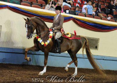 MSV Miss Belle GCH