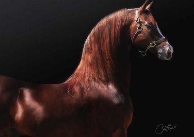Minion Millennium Morgan Stallion At Stud